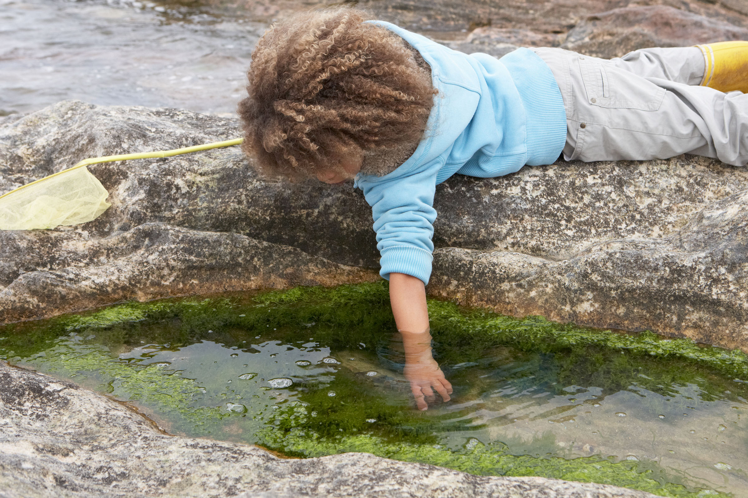 How many different creatures live in a rock pool?